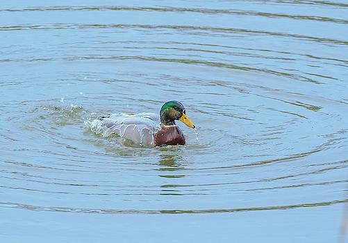Allan Levin - Water Off A Ducks Back