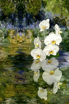 Water Orchid by Tom Romeo