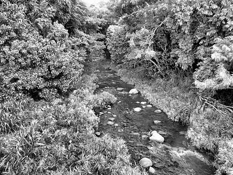 Water Path in black and white by Diamond Jade