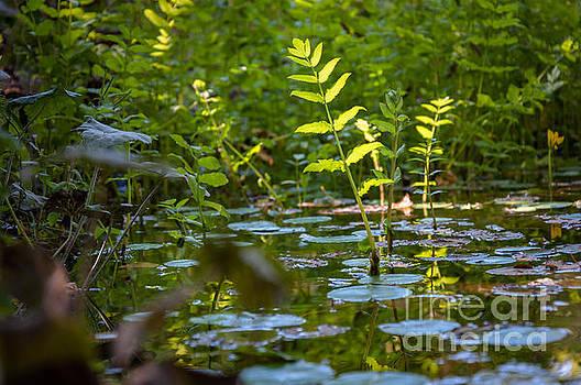 Mariusz Talarek - Water plants