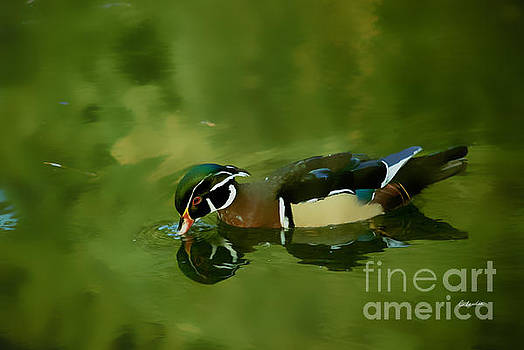 Male Wood Duck Water Reflections by Claudia Ellis