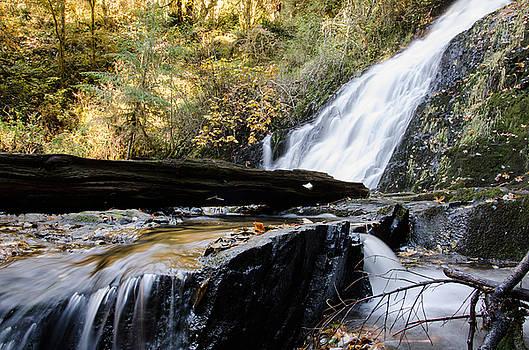Margaret Pitcher - Water Seeking Paths