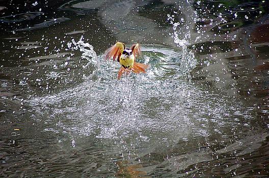 Water Wings by Matthew Hall