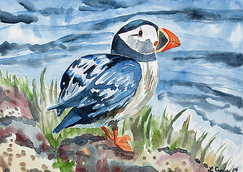 Watercolor - Atlantic Puffin Preparing to Fly by Cascade Colors