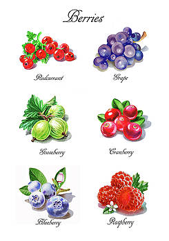 Watercolor Berries Illustration Collection I by Irina Sztukowski