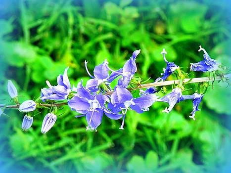 Watercolor Blooms by Deborah Kunesh