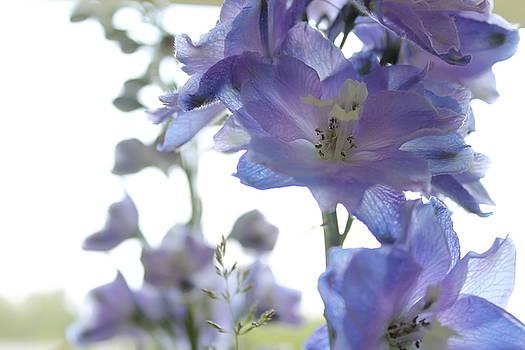Watercolor Flowers II by Nancy Furstinger