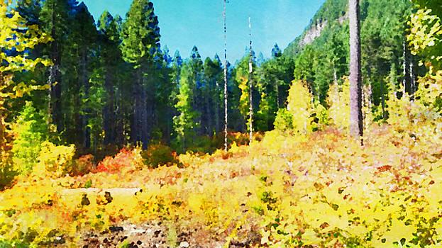 Bonnie Bruno - Watercolor Forest
