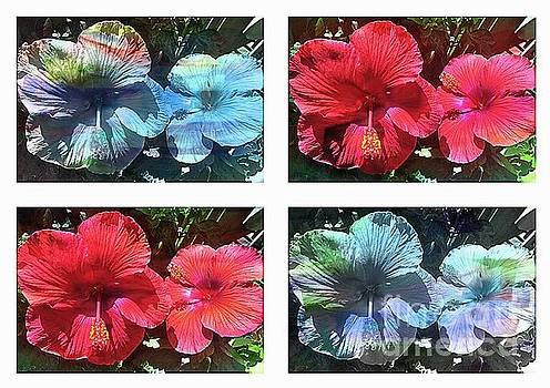 Watercolor Hibiscus by Four by Barbara Griffin