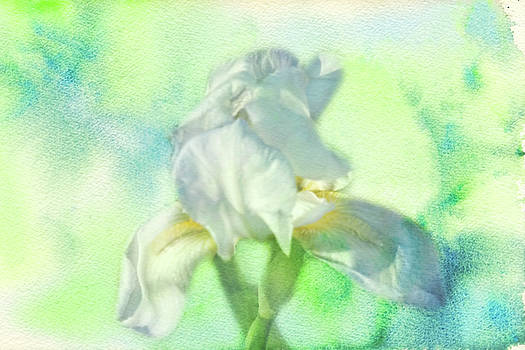 Watercolor Iris by Joan Bertucci
