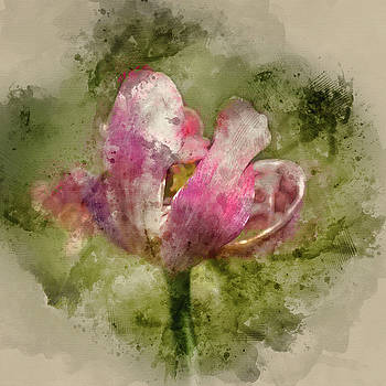 Watercolor painting of Beautiful image of decaying wilted tulip flower at the end of Spring by Matthew Gibson