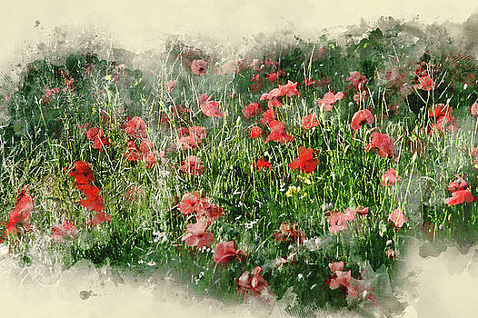 Watercolor painting of Poppy field landscape in English countrys by Matthew Gibson