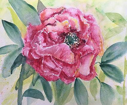 Watercolor Peony by Marita McVeigh