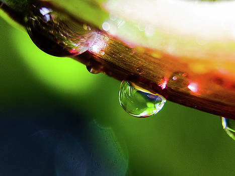 Waterdrop Falling from Leaf by Vectory Floor