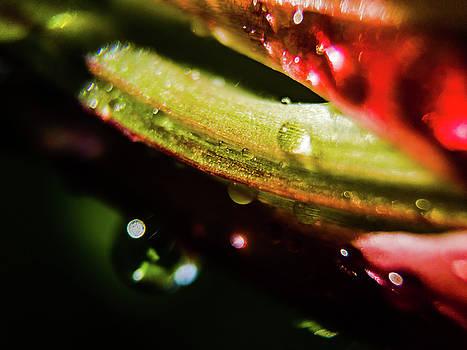 Waterdrop on Leaf by Vectory Floor