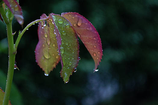 Waterdrops 2 by Peter Fodor