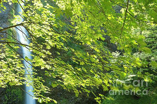Charmian Vistaunet - Waterfall and Maple