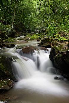 Jill Lang - Waterfall in a Creek