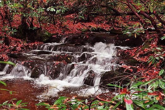 Waterfall in Fall by Susan Cliett