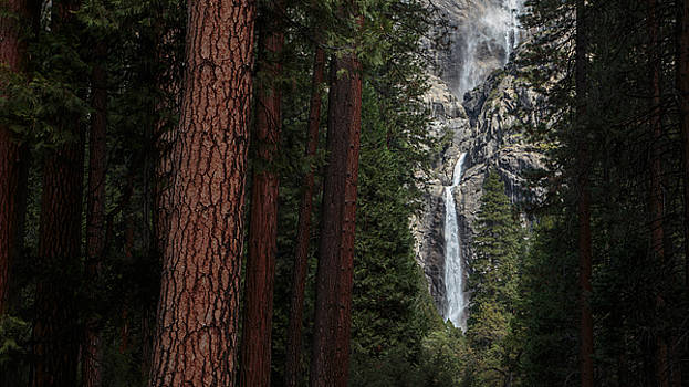 Waterfall of Pines by Mark White