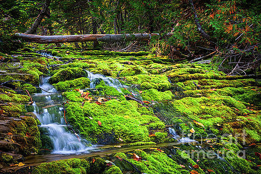 Waterfall over mossy rocks by Elena Elisseeva