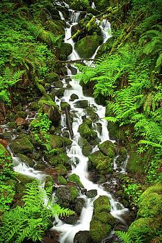 Rick Strobaugh - Waterfall through the Ferns