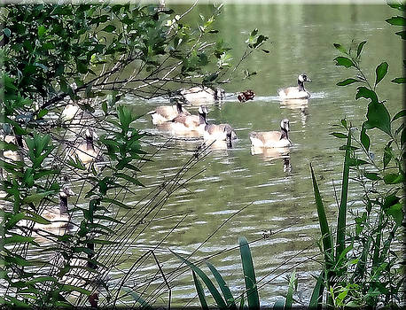 Waterfowl at the park by Mikki Cucuzzo