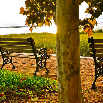 Waterfront Park Bench by Lori Kesten