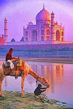 Dennis Cox - Watering Camel at Taj