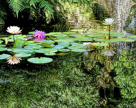 Waterlilies and Waterfall at Zilker Park by Michael Ziegler
