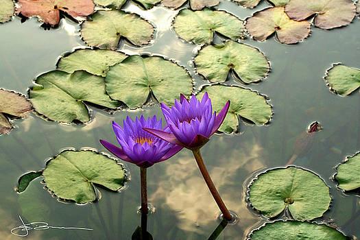 Waterlilies by Jim Bunstock