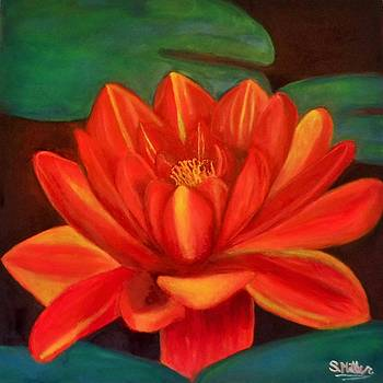 WaterLilly by Stormy Miller