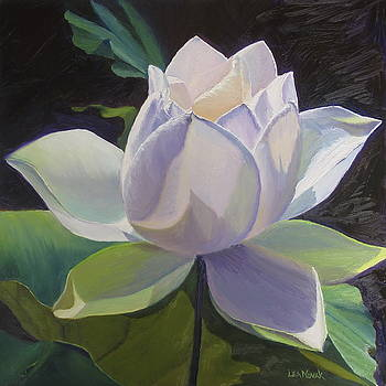 Waterlily--All the Colors of White by Lea Novak
