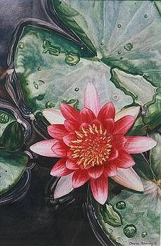 Waterlily by Cherie Sikking