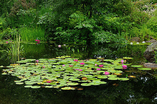 Reimar Gaertner - Waterlily garden pond at Annapolis Royal Historic Gardens Nova S