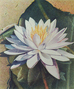 Waterlily II by Bonnie Haversat