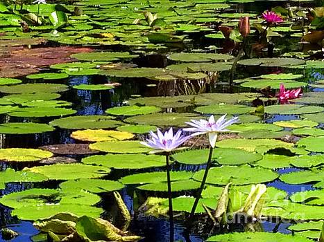 Waterlily impression  by Irina Davis