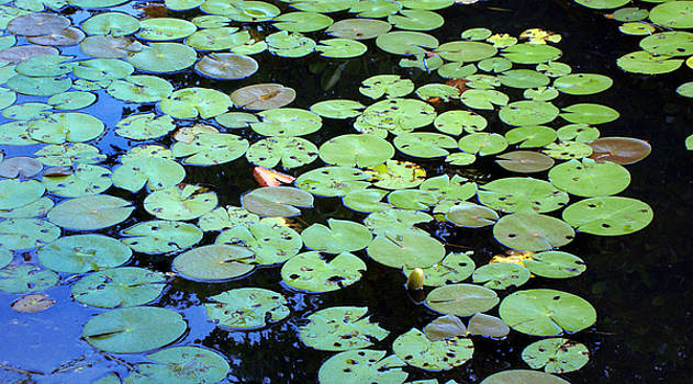 Waterlily Sky by Linda Clearwater