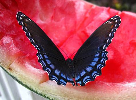 Lara Ellis - Watermelon Butterfly