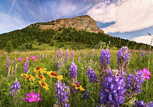 Waterton Wildflowers by Tracy Munson