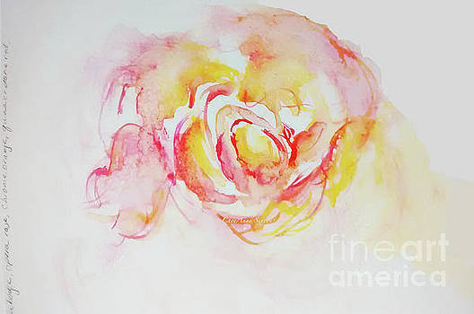 Watery Peach Rose watercolour by CheyAnne Sexton