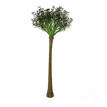Corey Ford - Wattieza Tree
