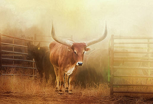 Watusi in the Dust and Golden Light by Judy Neill