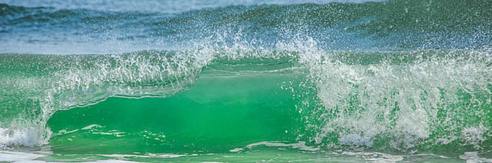 Paula Porterfield-Izzo - Wave Curl