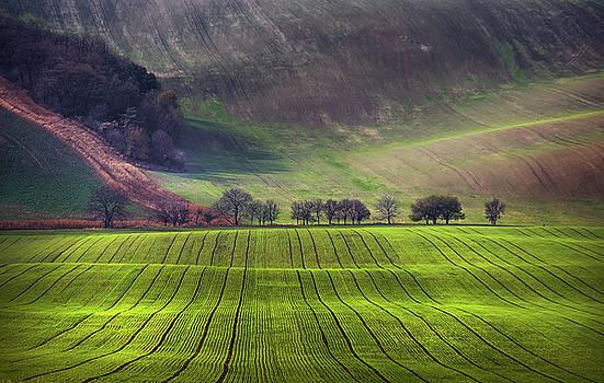 Jenny Rainbow - Wavy Hills