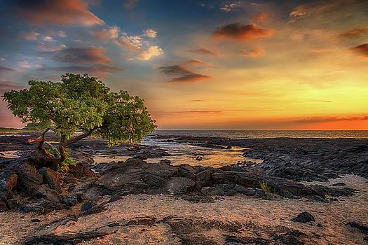 Susan Rissi Tregoning - Wawaloli Beach Sunset