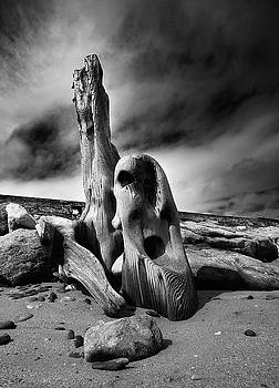 Weathered by Barry Lawlor