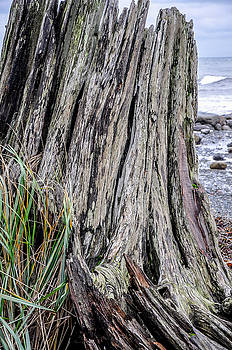 Weathered Stump III by Roxy Hurtubise