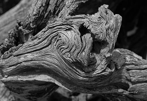 Weathered by Suzanne Gaff
