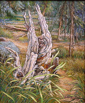 Weathered Tree Stump  by Jackie Langford